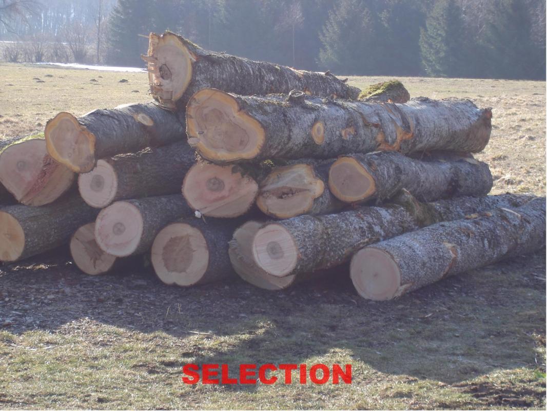 Dsc00942 Sélection du bois